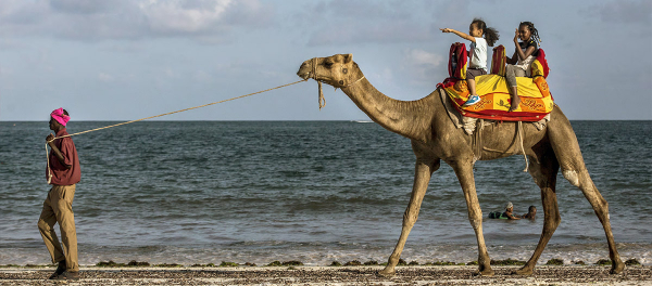 A vendor leads a camel carrying two children along the beachfront in Mombasa, Kenya, on Thursday, 23 November 2017